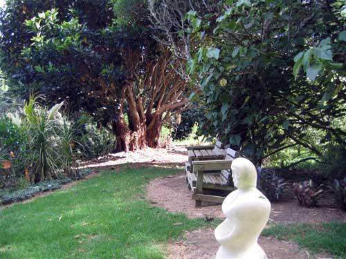 \'Bounty\' & Lord Howe Ficus