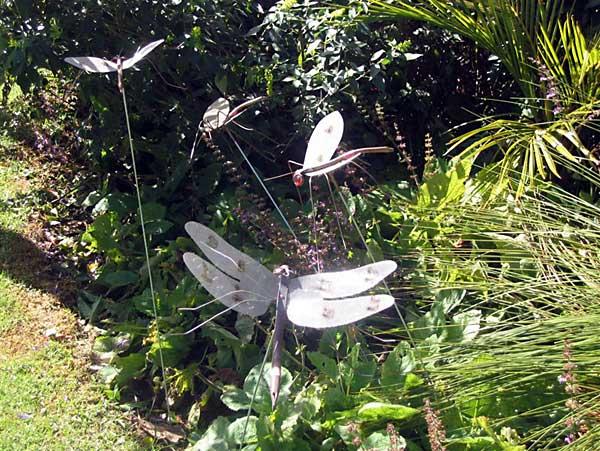 S. Angus: Drangonflies